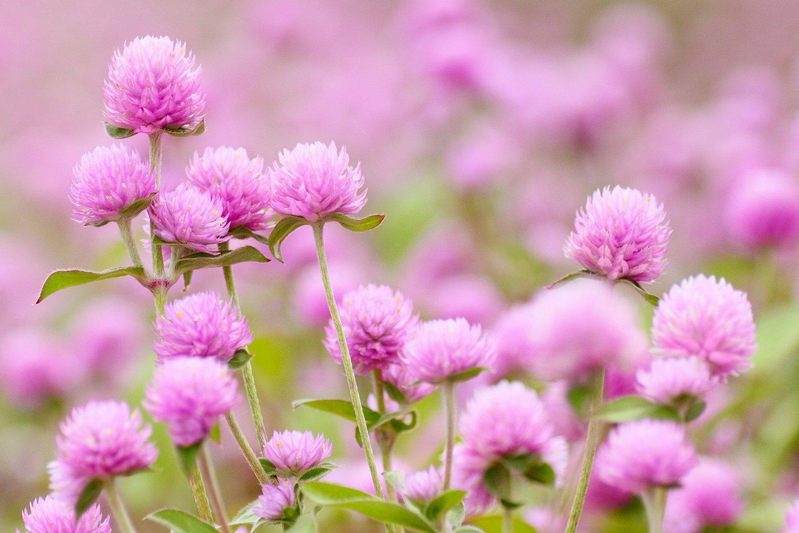 香川県の結婚式場シェルエメール&アイスタイルの花